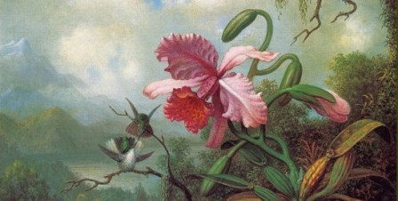 martin johnson-heade