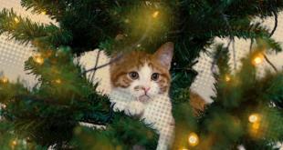 Natale da gatti