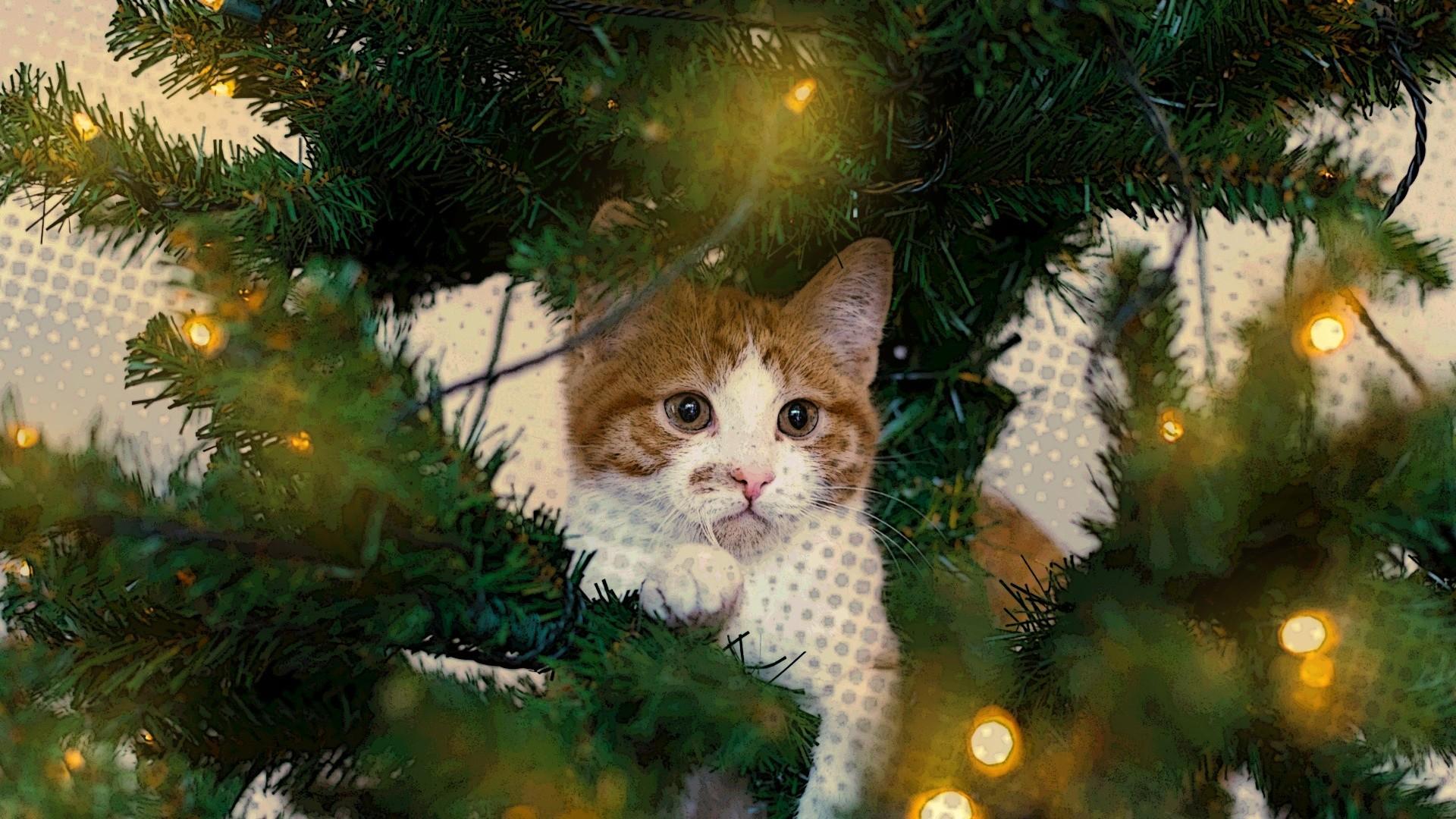 'Natale da gatti', il racconto di Natale di Valeria Serofilli all'insegna del perseguimento del bene