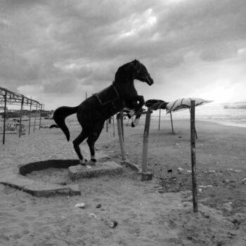 Black horse in Gaza
